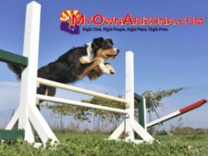 Dog Friendly Tucson Pet Hotel Motels for Pets Dog Friendly Tucson AZ