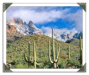 Tucson Weather History in AZ Tucson Forecast