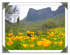 Picacho Peak State Park in AZ