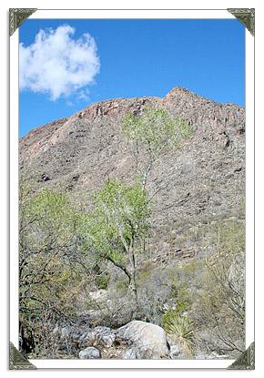 Pima Canyon Trail in Tucson AZ