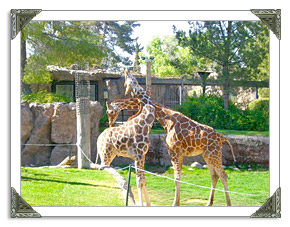 Reid Park Zoo in Tucson AZ