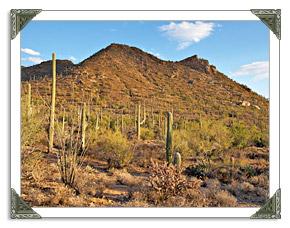 Saguaro National Park East West in Tucson AZ
