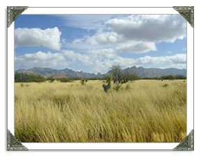 St David AZ Real Estate MLS Listings of Homes and Land For Sale in Arizona