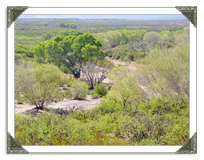 Sierra Vista AZ Real Estate MLS Listings of Homes and Land For Sale in Arizona