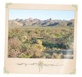 Arizona Land, Lots and Acreage For Sale