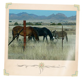 Arizona Horse Property and Equestrian Real Estate For Sale