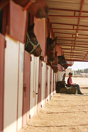 Arizona Horse Racing Properties Horse Land For Sale