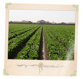 Arizona Farms and Ranches For Sale